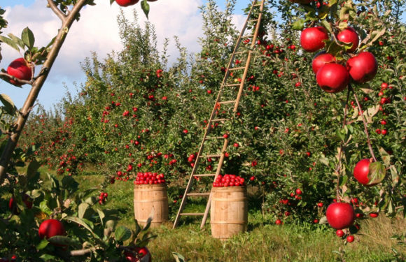 How to Form Effective Farm-to-Table Partnerships